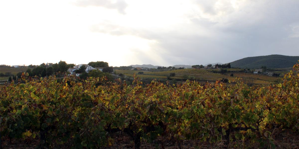 Aymar, vinyes ecològiques, Clàssic Penedès